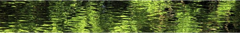Fl.zen.summer_on_water